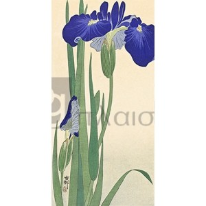 Ohara Koson - Irises