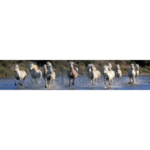 JS Studio - Camargue horses gallopping through water, Camargue, France