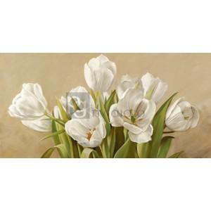Serena Biffi - Tulipani bianchi