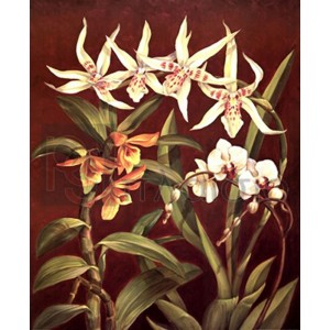 Rodolfo Jimenez - Orchid Trio I