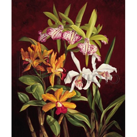 Rodolfo Jimenez - Orchid Trio II