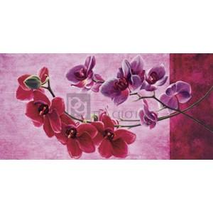 Sara J. Cortese - Composizione di orchidee