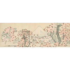 Katsushika Hokusai - Mount Fuji with Cherry Trees in Bloom