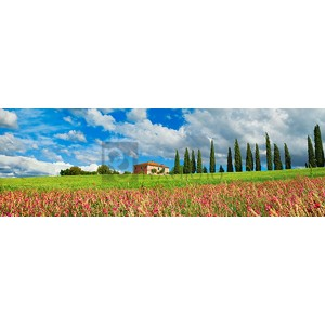 Frank Krahmer - Landscape with cypress alley and sainfoins, San Quirico d'Orcia, Tuscany