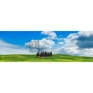 Frank Krahmer - Cypresses, Val d'Orcia, Tuscany
