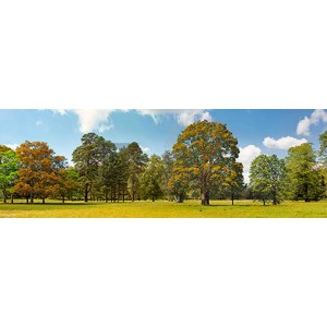 Pangea Images - Trees in a Park