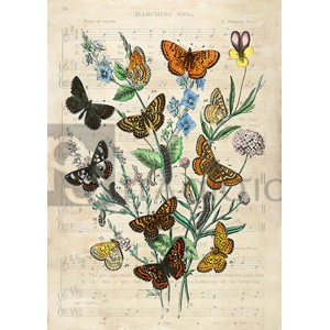Stef Lamanche - European Butterflies, After Kirby