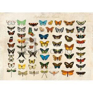 Stef Lamanche - Papillons du Monde, After D'Orbigny