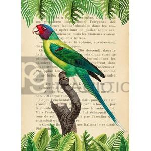 Stef Lamanche - The Plum-Headed Parakeet, After Levaillant
