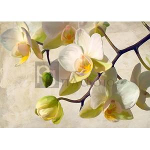 Luca Villa - Orchid in the sun