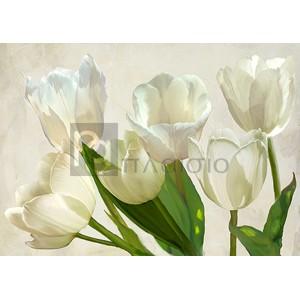 Luca Villa - White Tulips