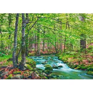 Frank Krahmer - Forest brook through beech forest, Bavaria, Germany