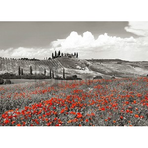 Frank Krahmer - Farmhouse with Cypresses and Poppies, Val d'Orcia, Tuscany (BW)