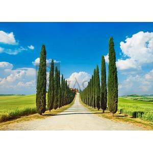 Frank Krahmer - Cypress alley, San Quirico d'Orcia, Tuscany