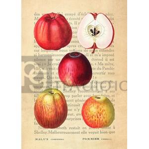Remy Dellal - Apple, After Redouté
