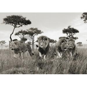 Pangea Images - Brothers, Masai Mara, Kenya