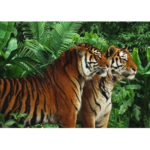 Pangea Images - Two Bengal Tigers