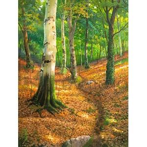 Adriano Galasso - Sentiero nel bosco