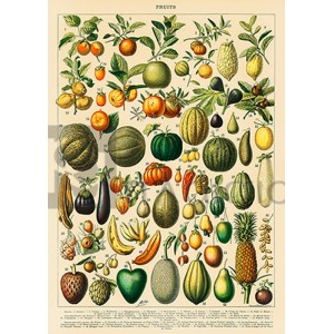 Adolphe Millot - Fruits and Vegetables