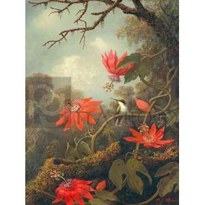 Martin Johnson Heade - Hummingbird and Passionflowers