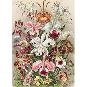 Ernst Haeckel - Orchidaeacae