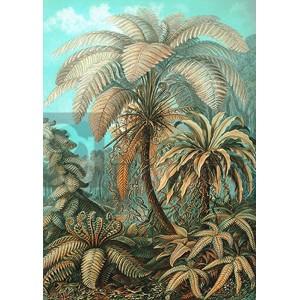 Ernst Haeckel - Filicinae