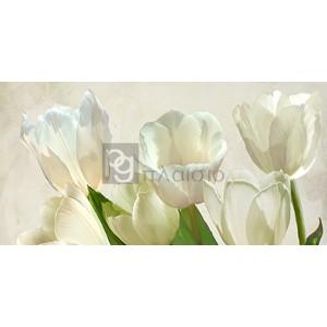 Luca Villa - White Tulips (detail)