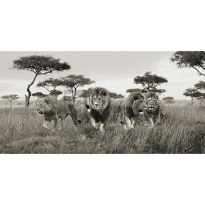 Pangea Images - Brothers, Masai Mara, Kenya (detail)