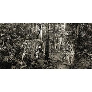Pangea Images - Bengal Tigers (detail, BW)
