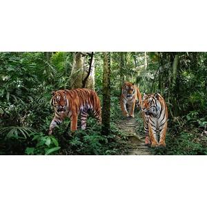 Pangea Images - Bengal Tigers (detail)