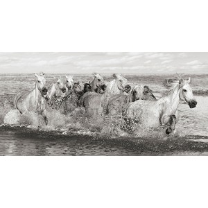 Pangea Images - Herd of Horses, Camargue