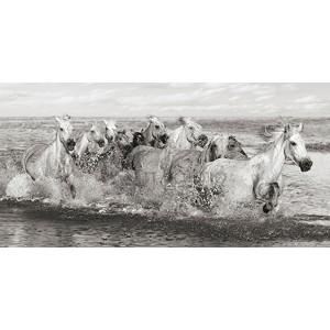 Pangea Images - Herd of Horses, Camargue