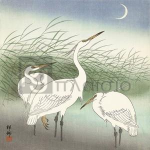 Ohara Koson - Herons in shallow water