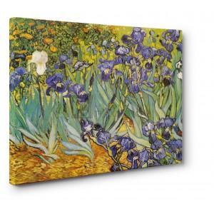 Claude Monet - Campo di fiori gialli