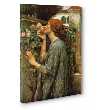 Waterhouse John William - My sweet rose