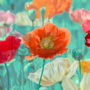 Cynthia Ann - Poppies in Bloom I
