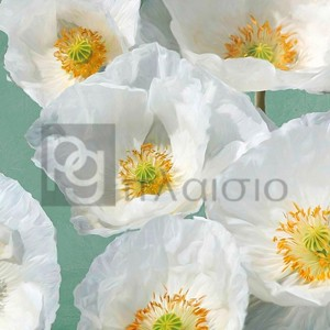 Leonardo Sanna - Poppies on Mint II