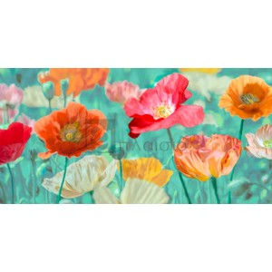 Cynthia Ann - Poppies in Bloom