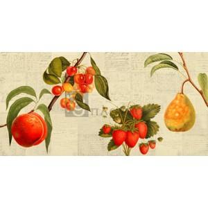 Remy Dellal - Fruits de saison