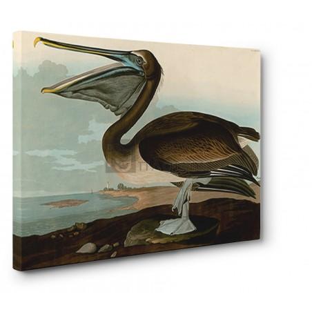 John James Audubon - Brown Pelican