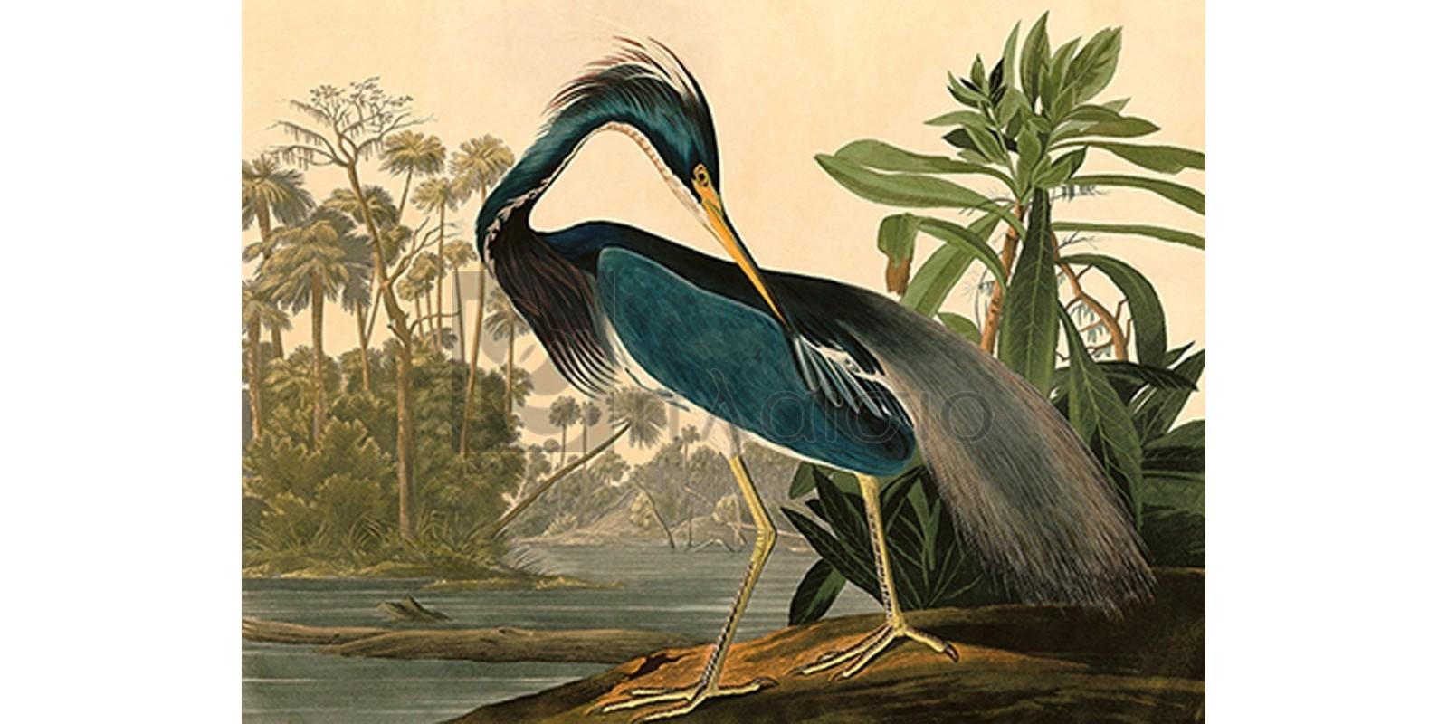 John James Audubon - Louisiana Heron