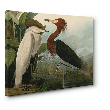 John James Audubon - Purple Heron