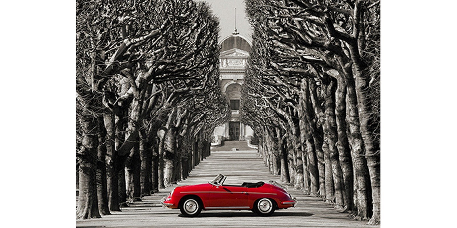 Gasoline Images - Roadster in tree lined road, Paris