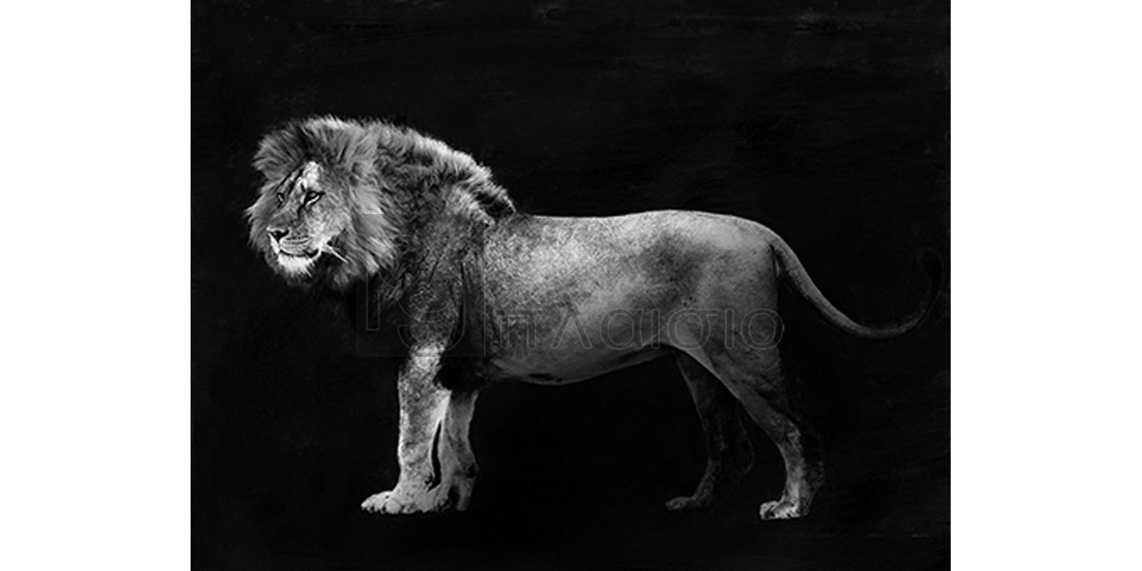 Julian Lauren - Panthera Leo