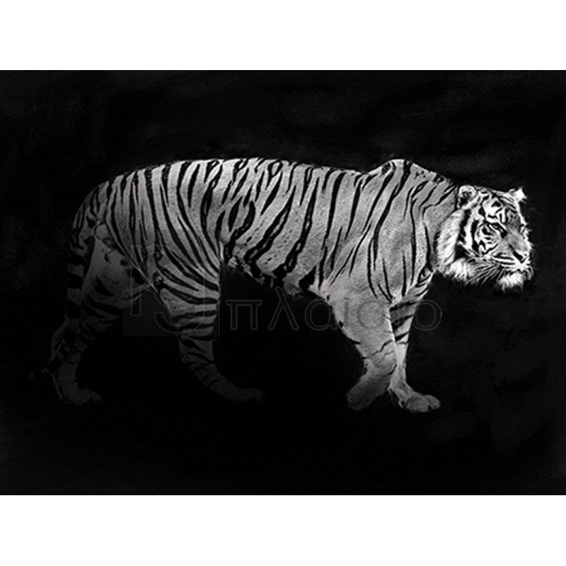 Julian Lauren - Panthera Tigris