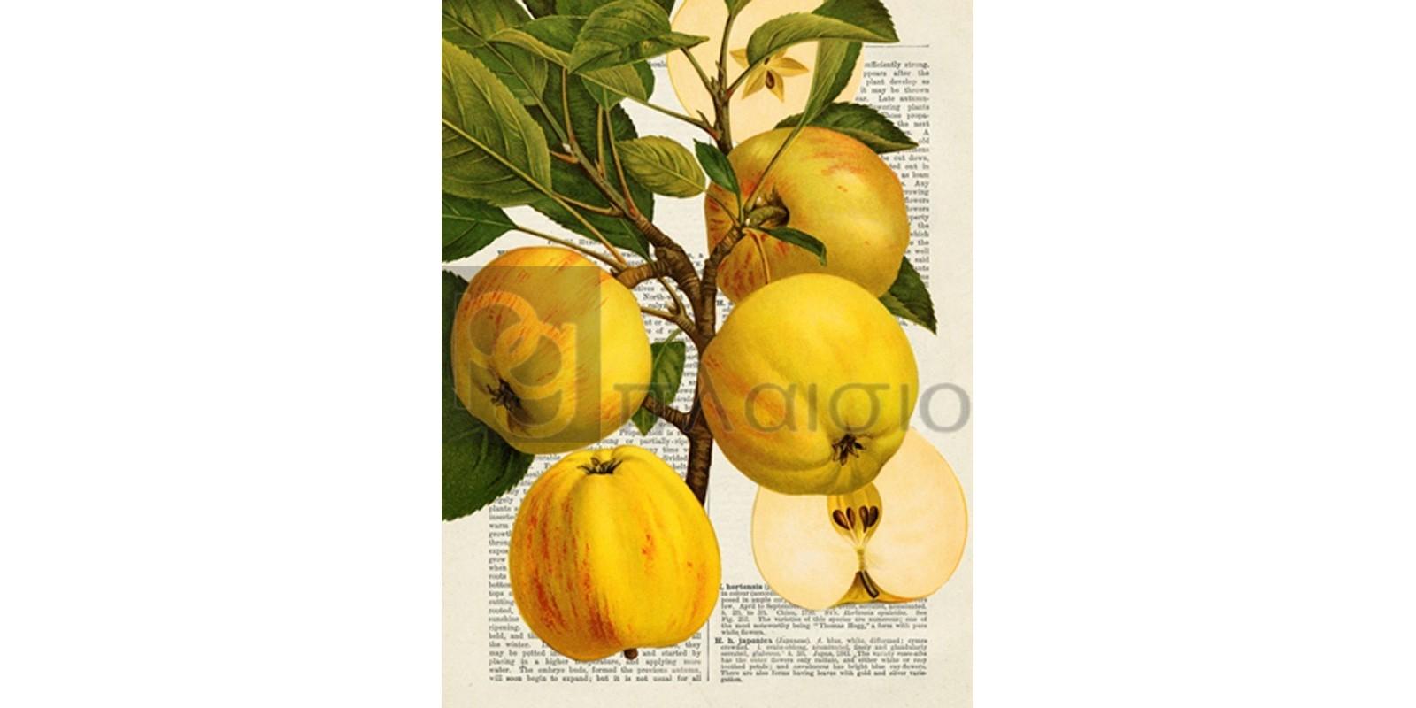 Remy Dellal - Fruits de saison, Pommes