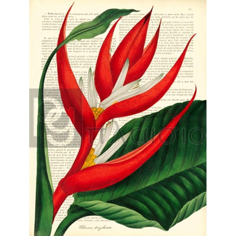Remy Dellal - Vintage Botany I