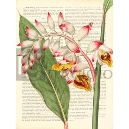 Remy Dellal - Vintage Botany II