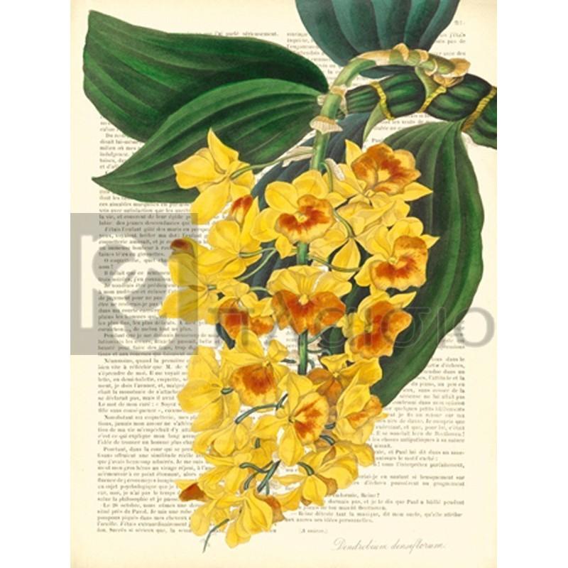 Remy Dellal - Vintage Botany III