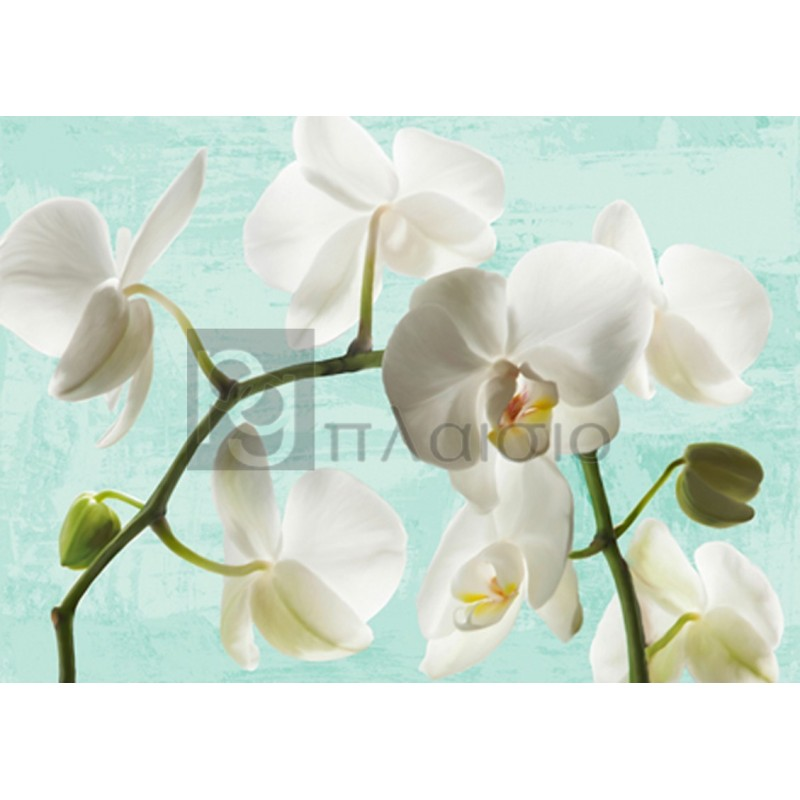 Jenny Thomlinson - Celadon Orchids